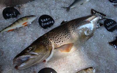 Informationen zum Tag der Fischerei 2015