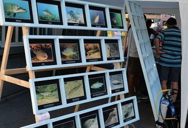 Voranzeige Schweizerischer Tag der Fischerei 2015