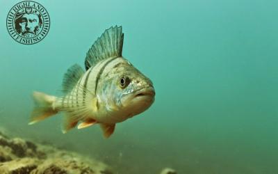 Herzliches Willkommen auf www.highland-fishing.ch