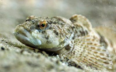 Flossen, Füsse, Flügel – Der Werdegang der Wirbeltiere