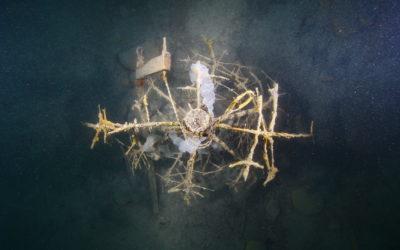 Eglibaumprojekt Thunersee Bericht 2017, Highland Fishing