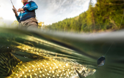 Über Fische und Fischer