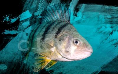 AQUA ART: Unterwasserfotografie trifft Kunst