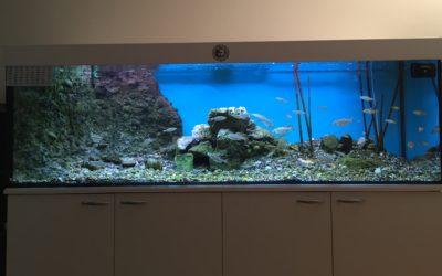 Kaltwasseraquarium mit einheimischen Fischen