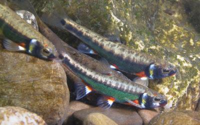 Kleine Fische – grosse Bedeutung