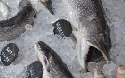 Neue Fischereivorschriften – das musst Du wissen!